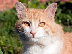 Feral Cat Care and TNR: A Beginner's Guide