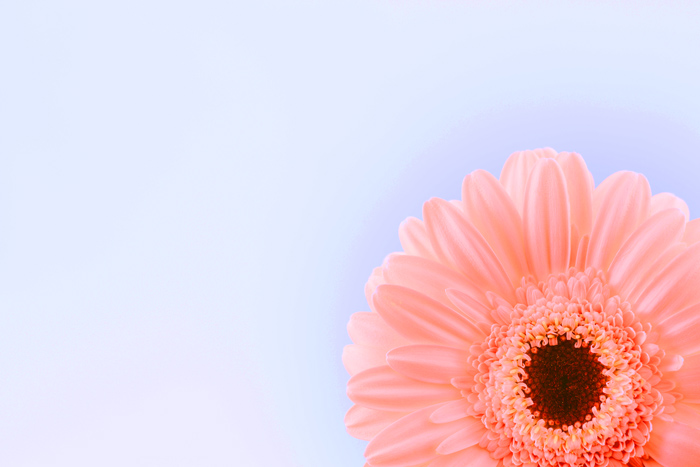 photo of a pinkish flower with blue background