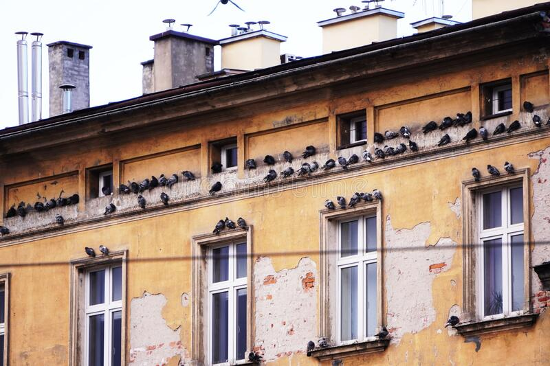 The facade of an old peeling paint building with pigeons on the cornice or Windows or eaves. The facade of old peeling paint building with pigeons on the cornice royalty free stock image