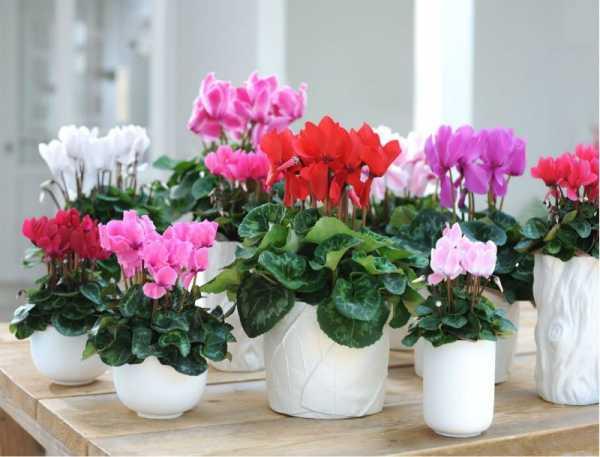 полить цветы фитовермом
